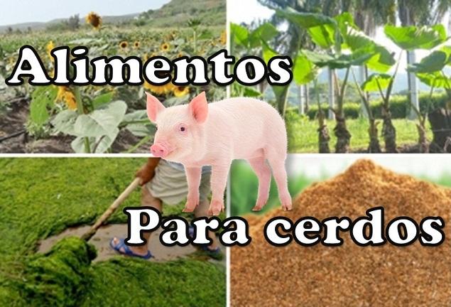 Alimentos para cerdos