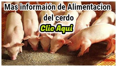 Mas informacion del alimentación del cerdo