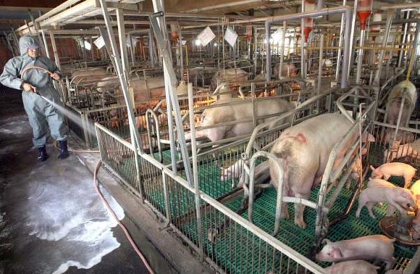 Bioseguridad-e-higiene-en-granjas-porcinas