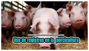 Uso de registros en la porcicultura