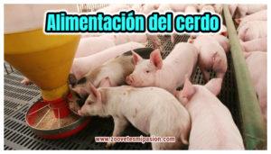 Alimentación del cerdo