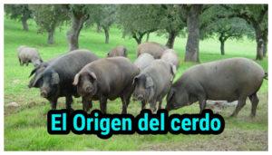 Origen del cerdo