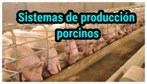 Sistemas de producción porcinos
