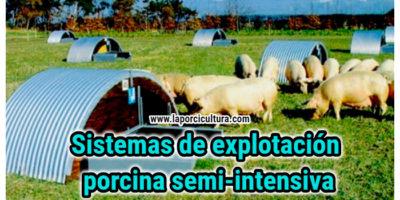 Sistemas de explotación porcina semi-intensiva